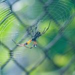 La peur de l'araignée