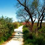 Chemin bonheur